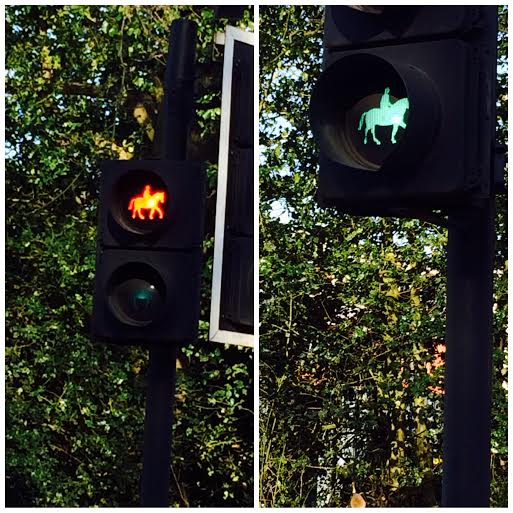 Traffic lights for horses!